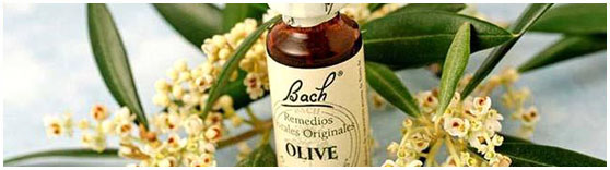 Bach remedies